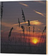 Sea Oats Blow In The Breeze As The Sun Wood Print