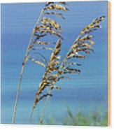 Sea Oats Gulf Of Mexico Wood Print by Thomas R Fletcher