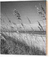 Sea Oats In Black And White Wood Print