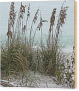 Sea Oats In Light Fog Wood Print