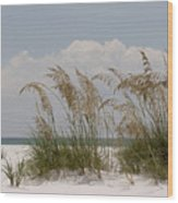 Sea Oats On A White Sandy Beach Wood Print