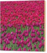 Sea Of Tulips Wood Print