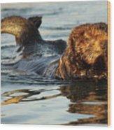 Sea Otter A Bit Embarrassed Wood Print