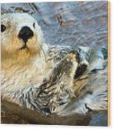 Sea Otter Portrait Wood Print