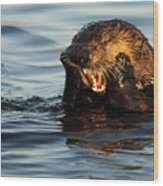 Sea Otter With A Toothache Wood Print