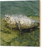Sea Pup Wood Print
