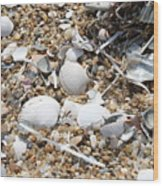 Sea Ribbons And Shells Wood Print