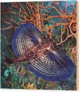 Sea Robin The Flying Gurnard Wood Print