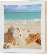Sea Shell Seashell Clam Beach Decorative Square Zippered Throw Pillow Wood Print