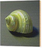 Sea Shell Turbo Marmoratus Wood Print