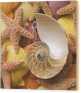 Sea Shells And Starfish Wood Print by Garry Gay