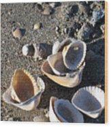 Sea Shells At Folly Beach In Charleston Sc Wood Print
