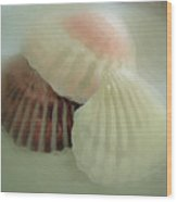 Sea Shells From The Sea Shore Wood Print