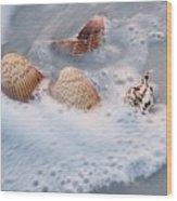 Sea Shells In A Wave Of Foam Wood Print