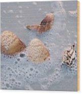 Sea Shells In An Ocean Wave Wood Print