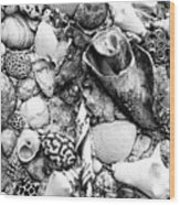 Sea Shells - Nassau, Bahamas Wood Print