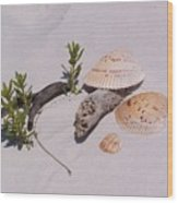 Sea Shells With Drift Wood And Small Plants Wood Print
