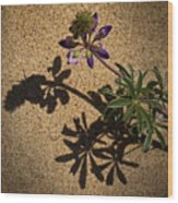 Sea Shore Lupine - 365-60 Wood Print