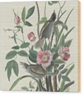 Sea-side Finch Wood Print
