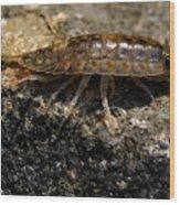 Isopod Wood Print