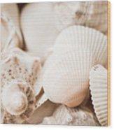 Sea Snails And Molluscs Empty Shells Sepia Toned  Wood Print