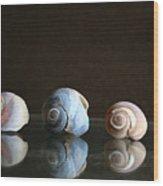 Sea Snails Wood Print