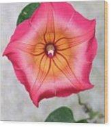 Sea Star Flower Wood Print