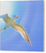 Sea Tern If I Were A Bird Wood Print