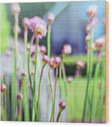 Sea Thrift Wood Print