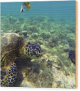 Sea Turtle #1 Wood Print