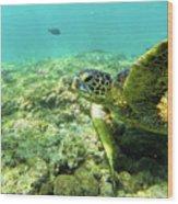Sea Turtle #2 Wood Print