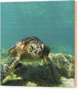 Sea Turtle #3 Wood Print