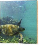 Sea Turtle #5 Wood Print