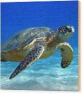 Sea Turtle Blue Wood Print