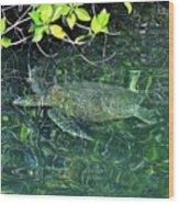 Sea Turtle In Galapagos Lagoon Wood Print