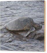 Sea Turtle On Rock Wood Print