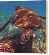 Sea Turtle On The Reef Wood Print by Bette Phelan