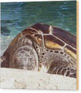 Sea Turtle Resting Wood Print