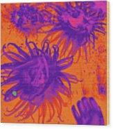 Sea Urchin 14 Wood Print