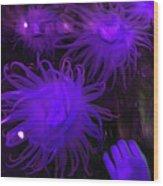 Sea Urchin 8 Wood Print