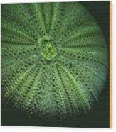 Sea Urchin  Wood Print