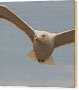 Seabird Closeup 01 Wood Print