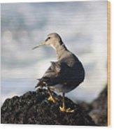 Seabird Wood Print