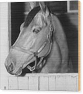 Seabiscuit 1933-1947, In His Stall Wood Print