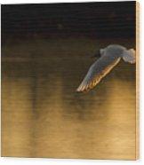 Seagul Wood Print