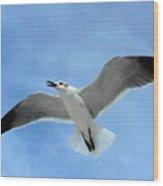 Seagull #1 Wood Print