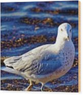 Seagull 1 Wood Print