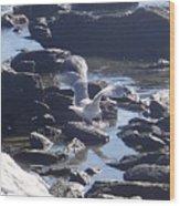Seagull 11 Wood Print