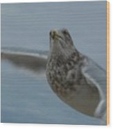 Seagull 4 Wood Print
