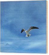 Seagull #5 Wood Print
